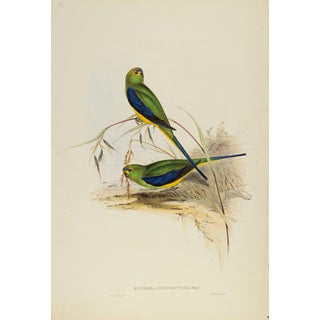 John Gould Print, Blue-Banded Grass-Parrakeet Plate 37 - Hill House Ed. For Sale