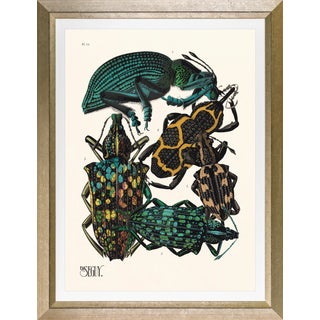 """Framed E. A. Seguy Print, """"Insects"""" Plate No. 14 For Sale"""