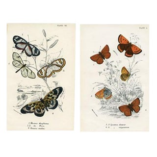 Clear-Wing and Copper Butterfly Prints, Pair, 1896 For Sale