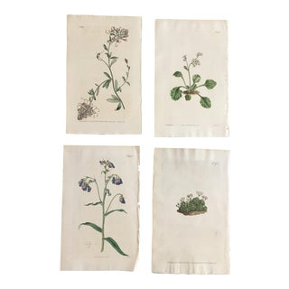 Set of Four 19th Century Hand-Colored Botanical Engravings