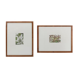 Botanical Prints in Teak Wood Frames - a Pair For Sale