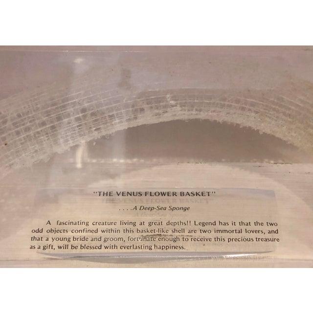 "Plastic ""The Venus Flower Basket"" on Lucite For Sale - Image 7 of 11"