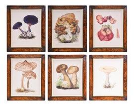 Image of Engraving Prints