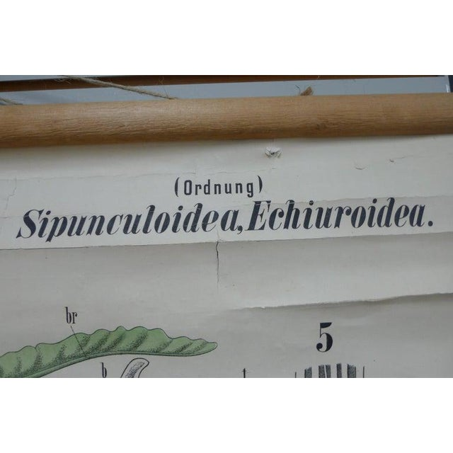 White Midcentury Schoolhouse Print of Worms, Printed in Germany in German For Sale - Image 8 of 13