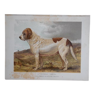 "Antique Dog Lithograph ""St. Bernard"" For Sale"