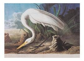 Image of John James Audubon Prints