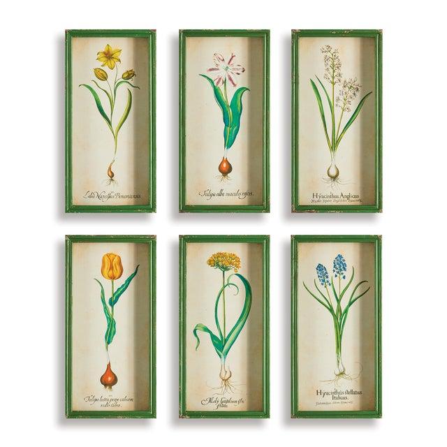 English Bulb Study Shadow Box Prints - Set of 6 For Sale - Image 3 of 3