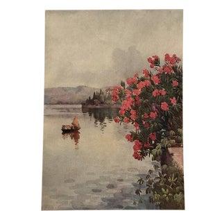 1905 Original Italian Print - Italian Travel Colour Plate - Oleanders For Sale