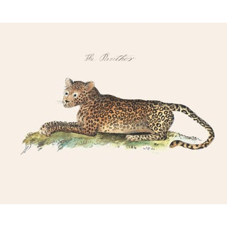 Vintage Panther, Cheetah, Tiger Print, Naturalist Collection For Sale