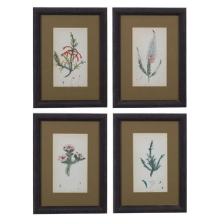 Heather Botanical Engravings by Henry Andrews C.1830 - Set of 4 For Sale