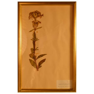 Framed Herbier in New Gold Leaf Frame For Sale