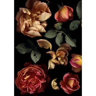 Rosa Lady of Shallot - Floral Photograph by Francesca Wilkinson For Sale