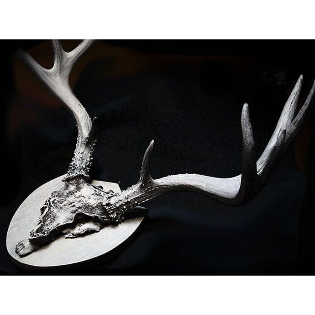 Mounted Deer Antlers - Image 4 of 5