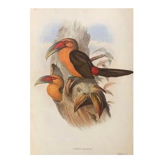 British Museum Toucan John Gould Print For Sale