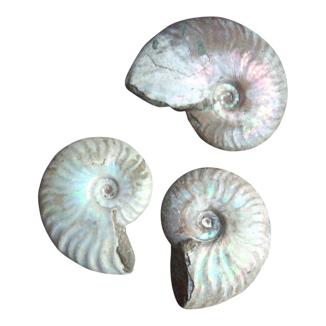 Opal Ammonite Fossils - Set of 3 For Sale