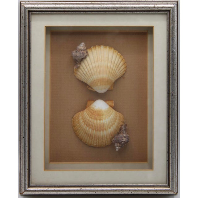 1990s Nautical Art Framed Seashell Collage For Sale - Image 6 of 6