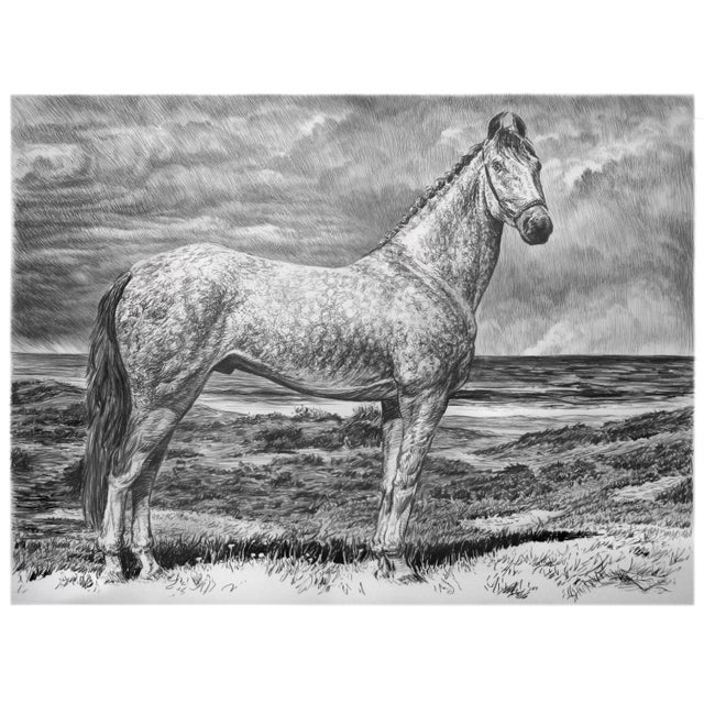"Contemporary Contemporary ""Dappled Akhal Teke"" Rick Shaefer Charcoal Print For Sale - Image 3 of 3"