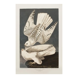 1990s Iceland or Jer Falcon by Audubon, Large American Classical Print For Sale