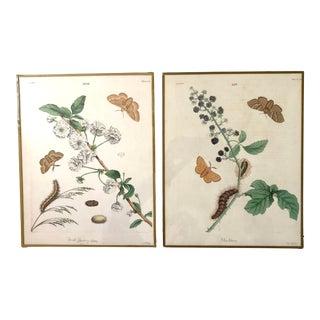 Pair of 1820 Antique Botanical Prints For Sale