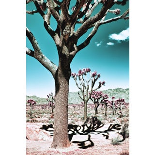 Contemporary 'Desert Shadows, Joshua Tree' Photography by Kristin Hart, 48x32 For Sale