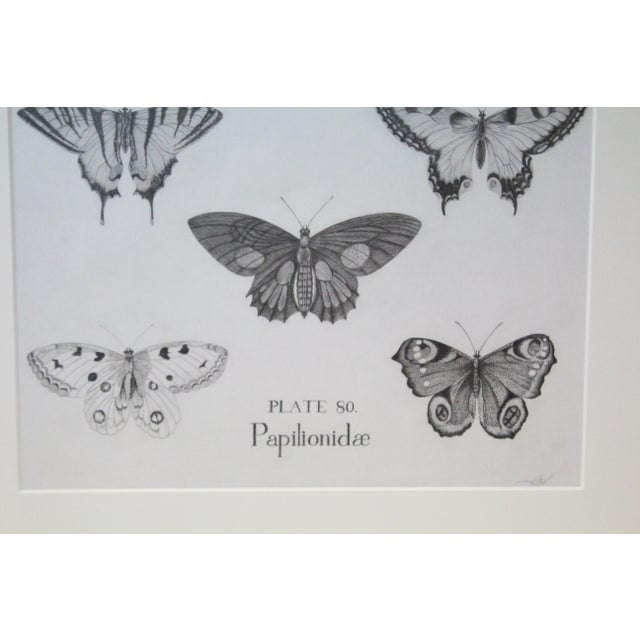 Black and White Butterflies Sketch For Sale In New York - Image 6 of 10