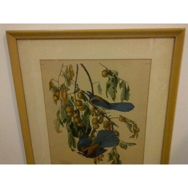 "Vintage ""Florida Jay"" Engraving Copy For Sale - Image 5 of 8"