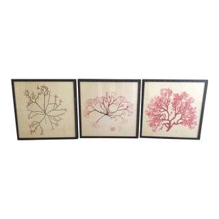Natural Curiosities Custom Framed Seaweed Prints - Set of 3