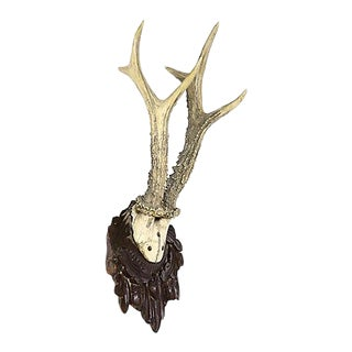 Black Forest Mounted Taxidermy Horns For Sale