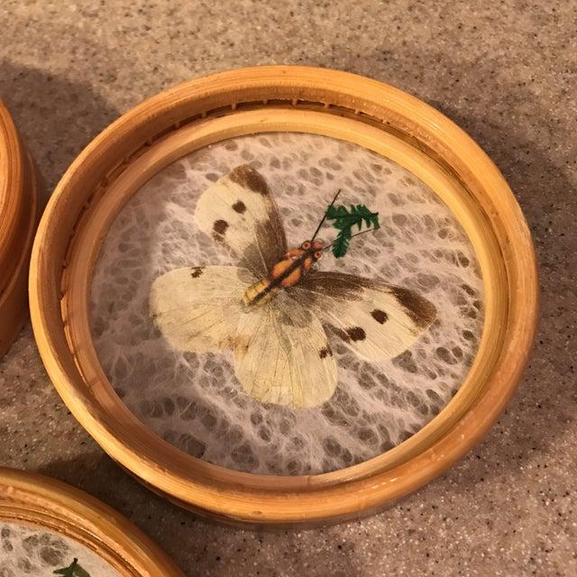 Butterfly Specimen Tray & Coaster Set - Image 9 of 11