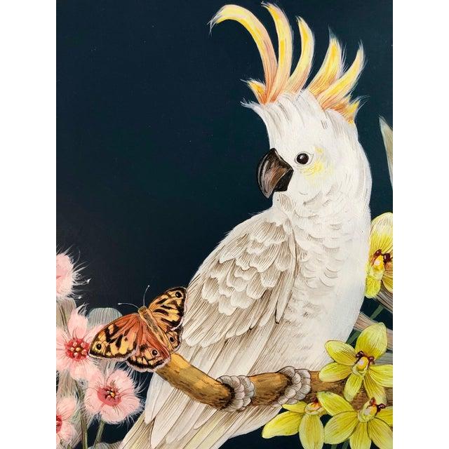 Cockatoo For Sale California