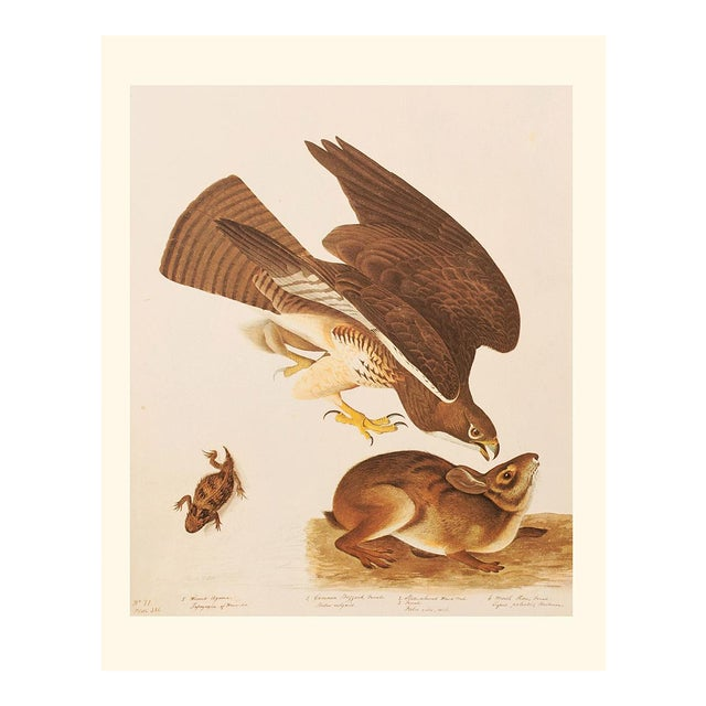 Swaison's Hawk, Marsh Hare and Horned Agarma by Audubon, Vintage Cottage Print For Sale