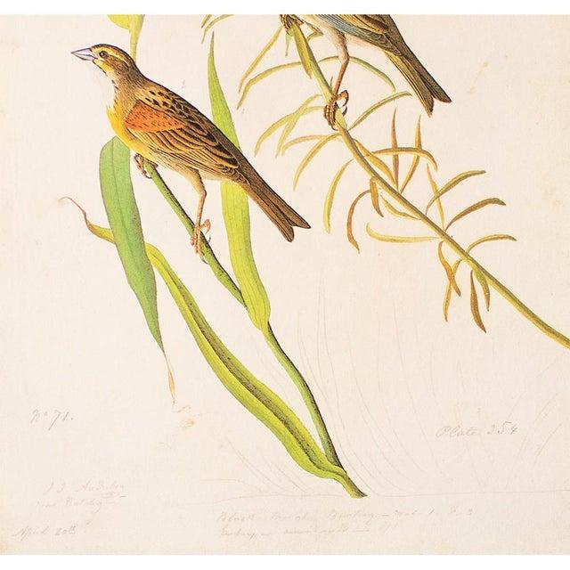 John James Audubon 1966 Black-Throated Bunting & Dickcissel by John James Audubon, Cottage Style Lithograph For Sale - Image 4 of 8