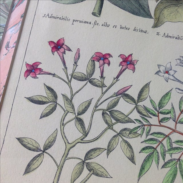 Vintage John Richard Botanical Print - Image 5 of 11