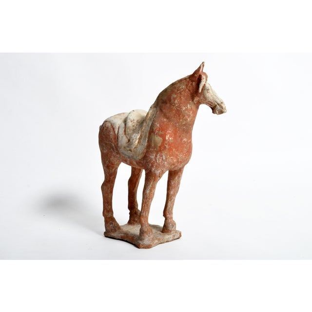 Tang Dynasty Horse For Sale - Image 4 of 13