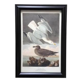John James Audubon 'Herring Gull' - No. 59