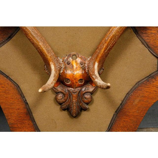 Victorian Carved Oak and Antler Coat/Hat Rack - Image 7 of 8