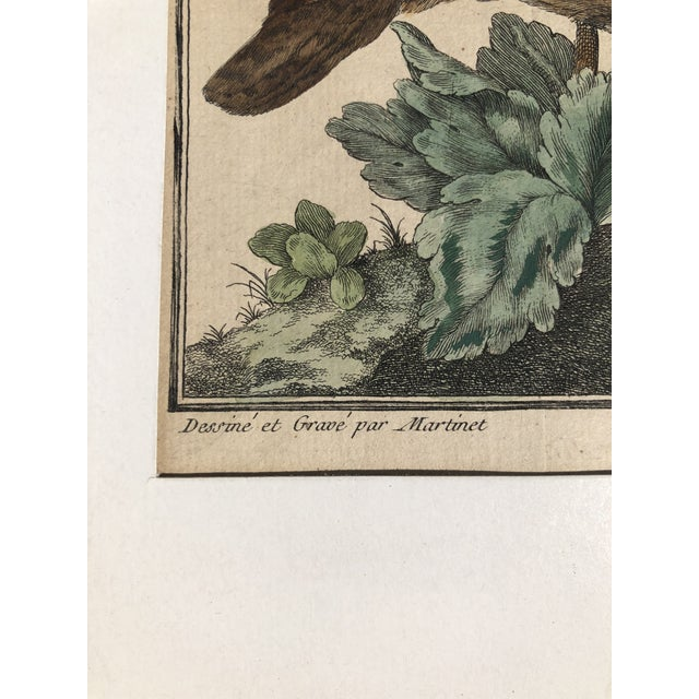 18th Century French Matted Bird Engraving by Martinet Featuring a Senegal Partridge and a Madagascar Quail For Sale - Image 4 of 13