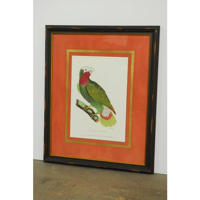 Wood English Hand-Colored Ornithological Print of a Parrot For Sale - Image 7 of 13