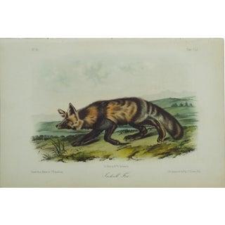 1840 Audubon's Jakall Fox Colored Lithograph For Sale