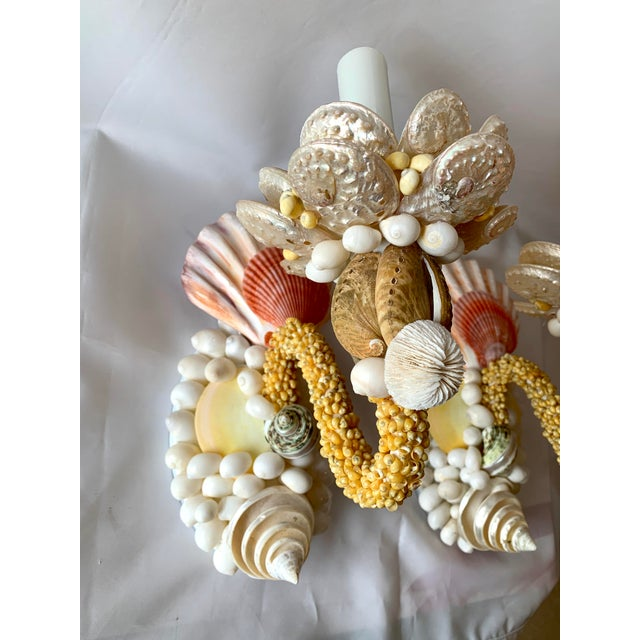 Nautical Single-Light Seashell Sconces - a Pair For Sale - Image 3 of 8