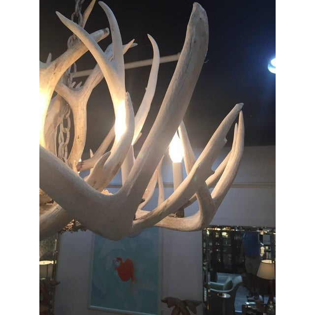 Antique Bleached Antler Chandelier For Sale - Image 5 of 7