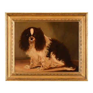 Cavalier King Charles Spaniel English School Oil Painting C.1860s