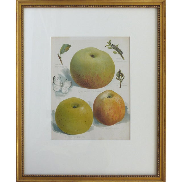 Offered for sale is a set of four early 20th century botanical prints depicting fruit and birds. Framed behind glass with...