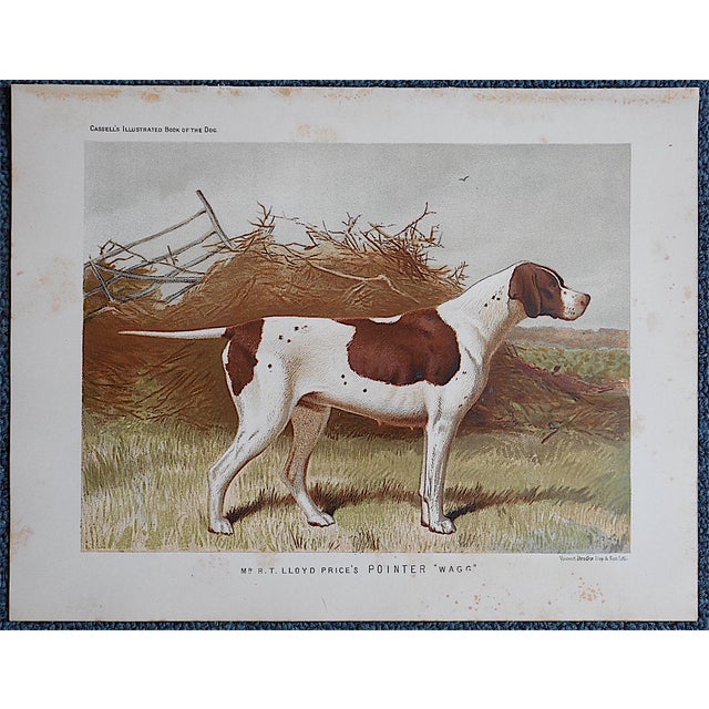 "Antique Dog Lithograph ""Pointer"" - Image 3 of 3"