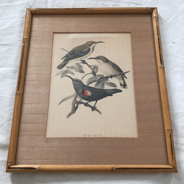 Americana Early 20th C. Framed Avian Prints - A Pair For Sale - Image 3 of 9