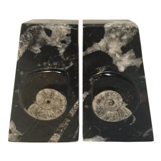 Moroccan Fossil Bookends - Pair