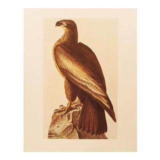 1960s Cottage Lithograph of Bald Eagle by Audubon For Sale