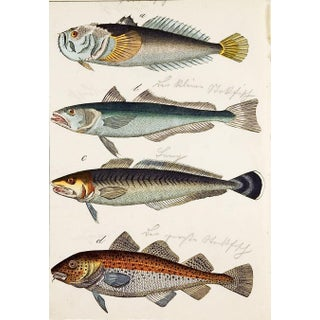 Hand Colored Fish Woodcut Prints - a Pair Preview