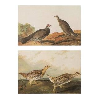 1966 Dusky Grous & Sharp-Tailed Grous by John James Audubon For Sale
