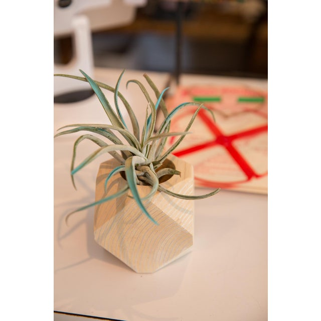 Contemporary Air Plant Wooden Planter Antiqued White For Sale - Image 3 of 5